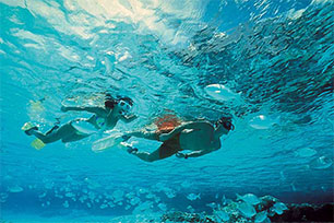 Snorkel Around Reef of Isla Mujeres